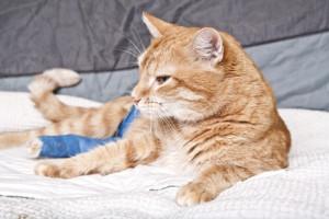 Ist die Katze mit gebrochenem Fuß versichert?